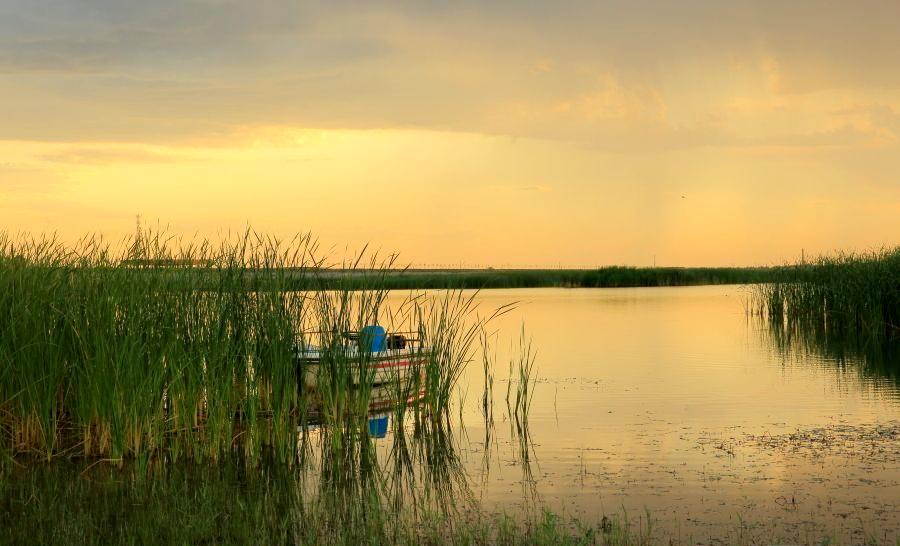 黄河口湿地行