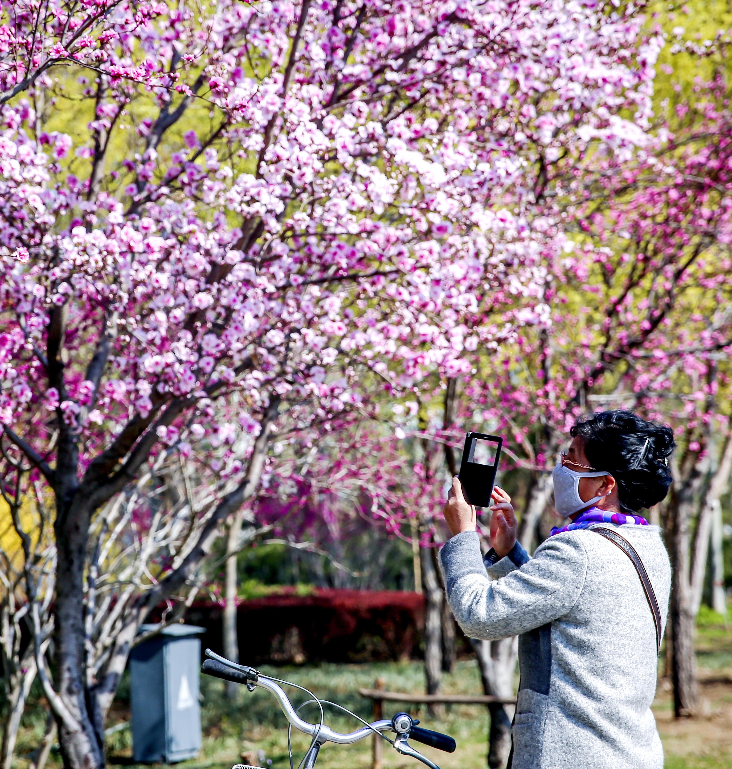 踏青赏花,沉醉在ballbet贝博网站四月天!