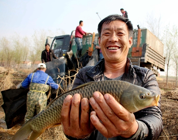 """【高新區】黃河鯉魚美味離尋常百姓不遠了!高新區""""種""""下萬斤魚苗"""