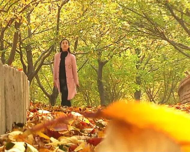 醉美秋日樱花山,漫山红叶迷人眼!