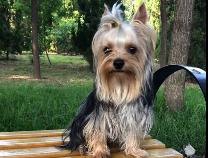 【寻宠启事】中海公园附近丢失一只小狗 主人急寻!