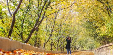 【视频】赏樱花山上层林尽染 品麦饭湖水滋养南瓜