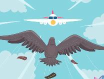 超惊险!飞机前舱盖80%受损!空中飞鸟的威力超乎想象…