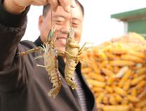 邹平码头鳌虾办起了观摩会 水产养殖群众得实惠