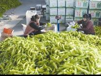 """价格一年暴涨超80% 辣椒为何""""辣翻天""""?"""