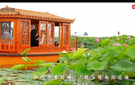 """相约十里荷塘 """"粽""""情向阳花海"""
