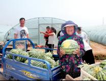 沾化区下河乡:大棚西瓜收成好 农超对接快销忙