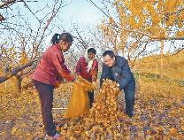 人民日报聚焦滨州:县里派来扶贫干部,梨园助力整体脱贫