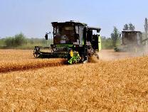 丰收年!今年邹平市小麦总产较去年增加近一成