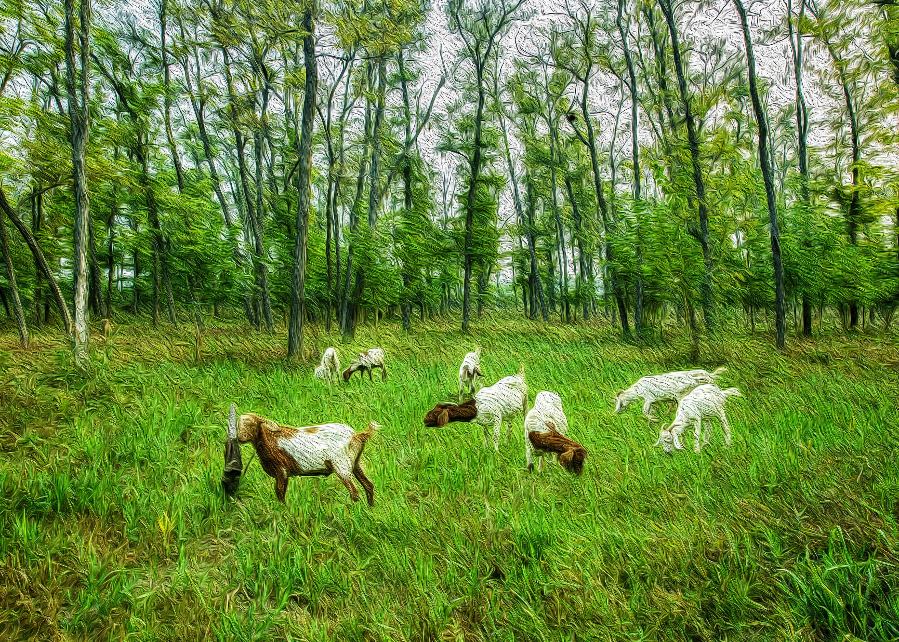 林场牧羊图