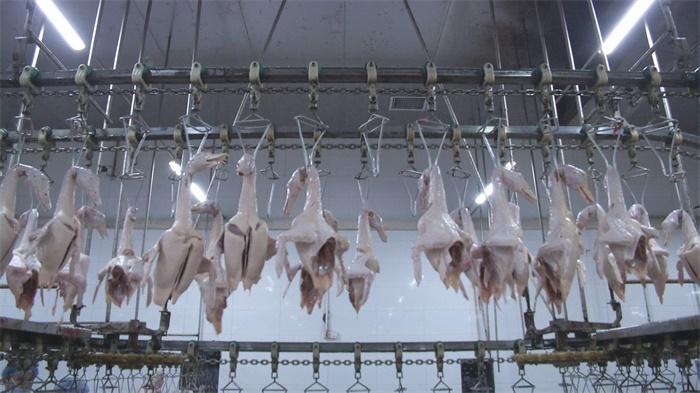 防控生產兩不誤 惠民畜牧企業穩步復產