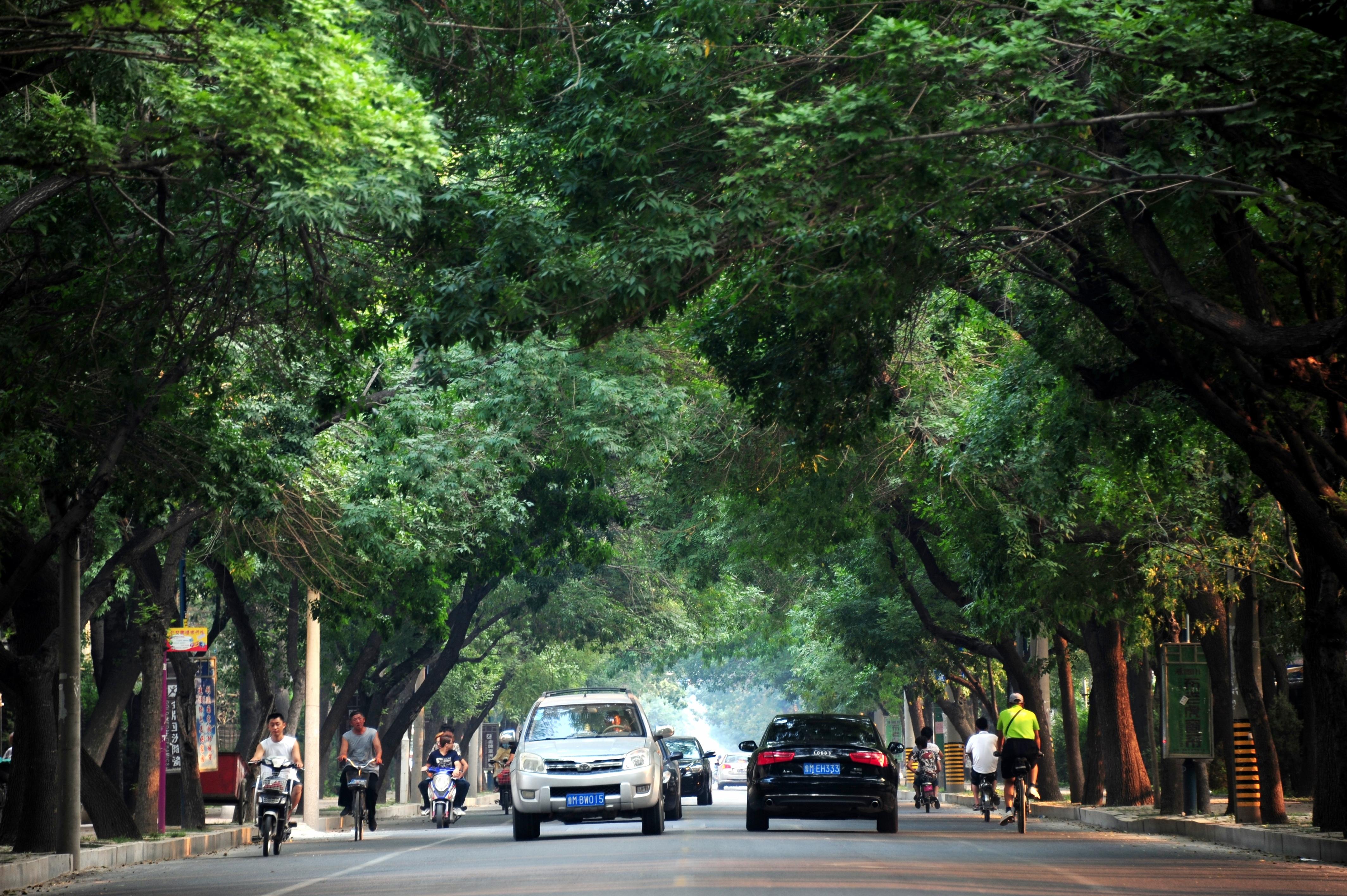 """滨州:""""市树""""白蜡打造园林绿化""""网红""""景观"""