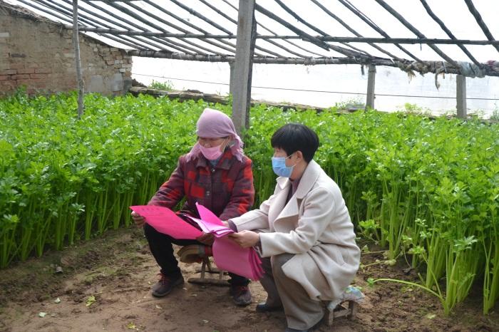 惠民县魏集镇:让菜农增收 市场、服务一个不能少
