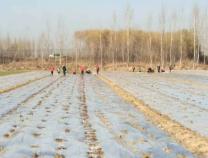 李庄镇2万亩洋葱大蒜被认定为无公害农产品