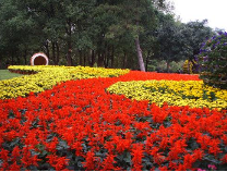 滨州市城区各部位花卉在9月30日前摆放到位