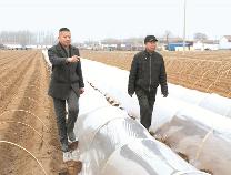 """王树东: 退伍兵情系""""乡村振兴""""  种植胡萝卜销往中东"""