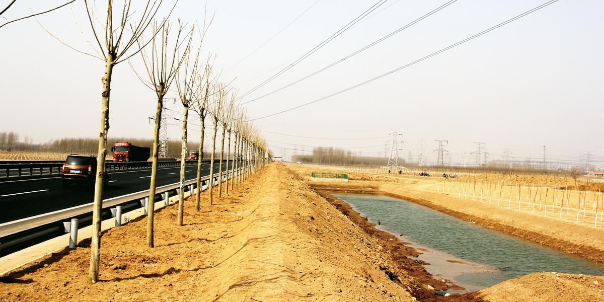 滨城区今春造林绿化抓精品出亮点