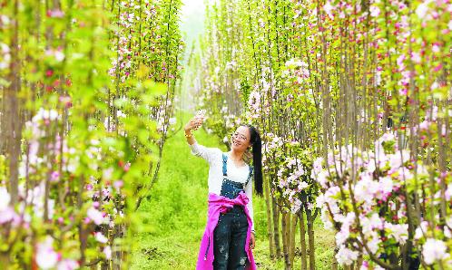 台子镇黄河旅游文化节举行