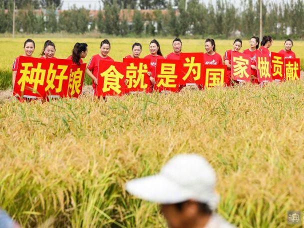 【视频】博兴乔庄:稻花香里说丰年 鱼米之乡收获忙