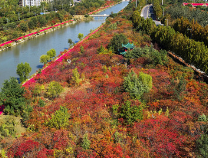 当下滨州哪里最美?红叶川公园秋景醉人