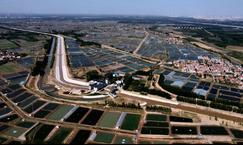博兴县乔庄镇:万亩虾塘生态美