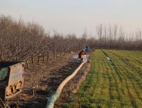 惠平易近大年夜年陈镇:防控不误农时 完成4万亩小麦浇灌