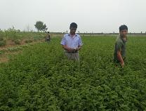 无棣众达中草药种植专业合作社大丰收