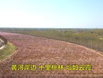 惠民:黄河岸边赏美景 十里桃林醉游人