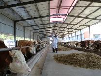 精准扶贫 | 阳信76家特色畜牧企业带动4900余贫困人口增收