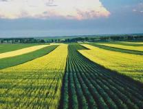 2020年滨州市粮食产业主营业务收入将突破1500亿元