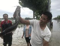 台风过境致马路积水成河  博兴民众街头捞鱼