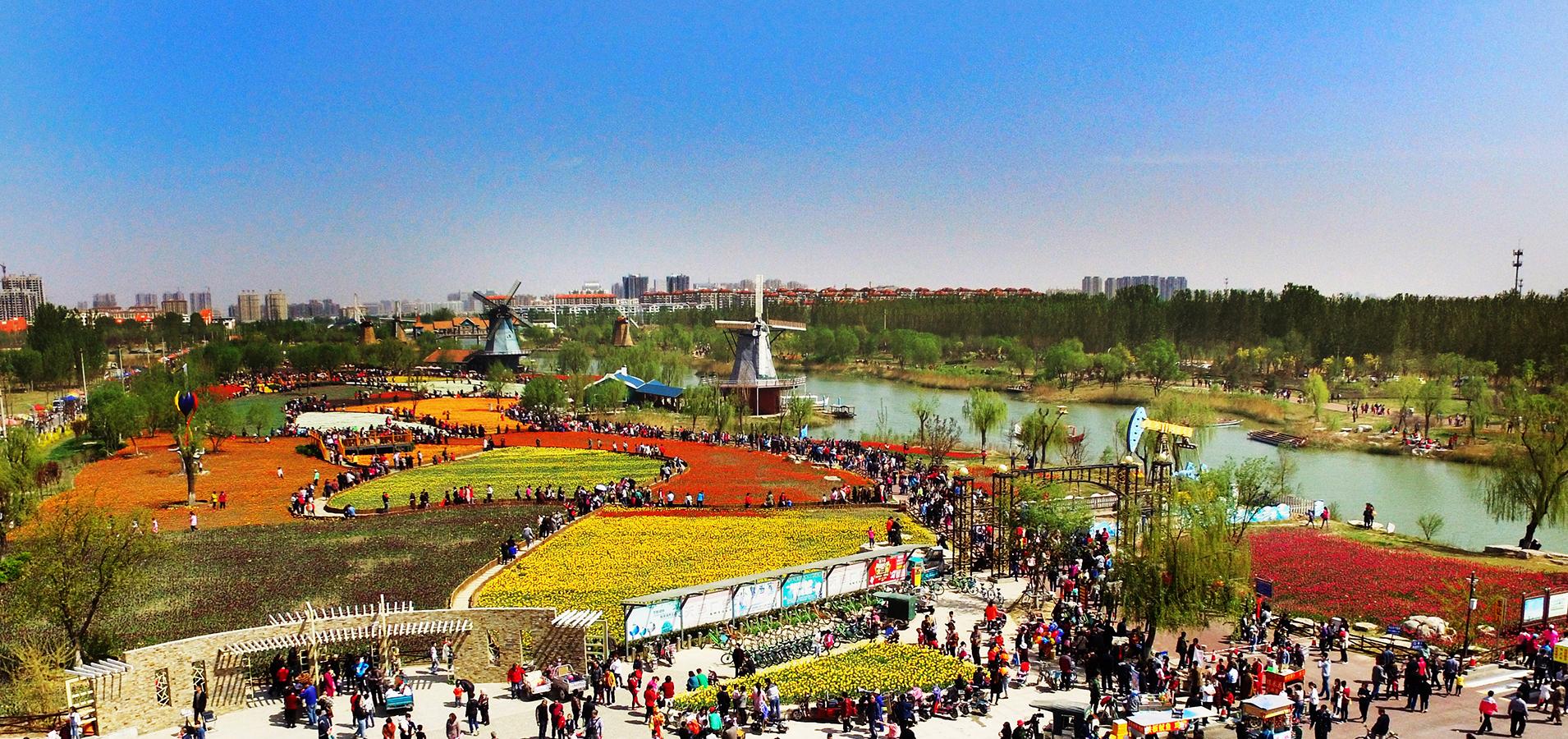 四月的郁金喷鼻有多美  快来秦皇河公园看看吧