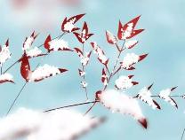 大寒+雨+雪+14℃!滨州天气要疯!还有几个坏消息……啥也不说了,盘它!