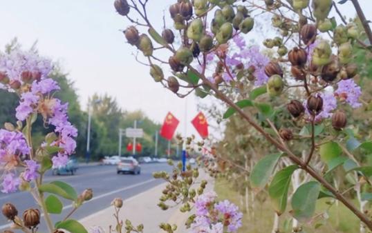 """【我的国庆观感】红旗飘飘庆国庆 大美滨州缀染""""中国红"""""""