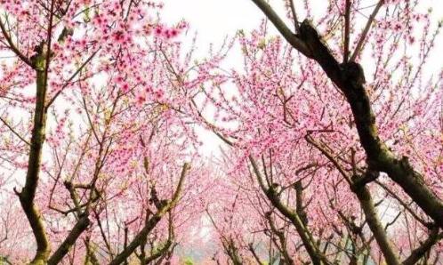 亚博777主页惠民,在最美的季节里遇见最美的你!