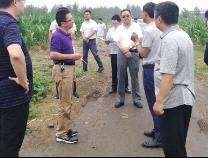 滨州市完成2019年高标准农田建设项目初步设计评审工作