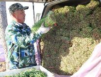 邹平台子镇:韭菜种植让农民致富有了盼头