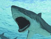 什么?四分之三的鲨鱼物种濒临灭绝?对人类也有极大威胁