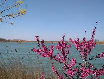 春游麻大湖:竹外桃花三两枝 春江水暖鸭先知