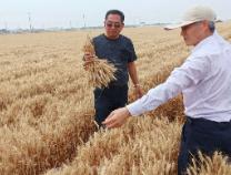 滨州开创小麦高低畦栽种技巧亩产冲破700公斤