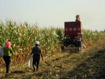 无棣助全县1.3万脱贫群众秋收秋种