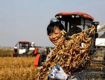 博兴庞家镇联合社种植的5000余亩大豆喜获丰收!