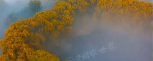 """【航拍】晨雾中的滨州蒲园惊现金色""""心形项链"""""""
