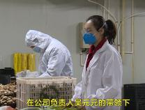 """吴元元:种下小蘑菇 撑起3000个贫困户的""""致富伞"""""""