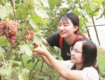 沾化泊头:乡村精品体验游助农增收