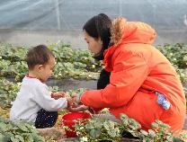 """滨州发展农业""""新六产""""让农民越来越多分享全产业链增值收益"""