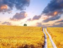 滨州时评:梦想并非遥不可及 努力奋斗就会有奇迹