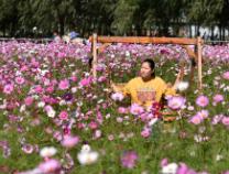 共度国庆·晒晒我的美丽假期:邹平长丰农场徜徉花海