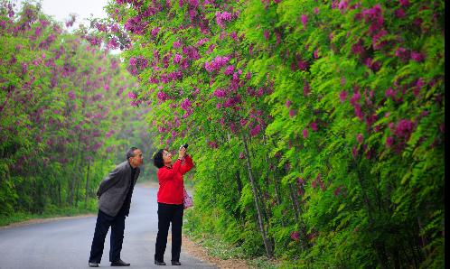 亚博yabo官方网站高新区首届槐花旅游节要你一起赏槐花