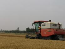 滨州418万余亩小麦迎来集中收获期
